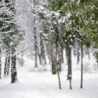 Зима. Последний снег. :: Анастасия Алексеева