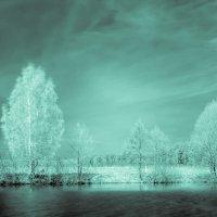 Пейзаж в инфракрасном свете :: Геннадий Хоркин