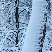 Ледяной дождь 2011 :: Михаил Розенберг