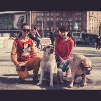 Собаки и очки :: Евгений Тихонов