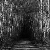 Таинственный лес :: Anton Fomin