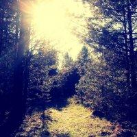 в лесу :: Анастасия Тимофеева