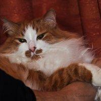 Кошка.. и любимая хозяйская ножка :: Татьяна Хромова
