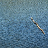 Над водой :: Татьяна Баценкова