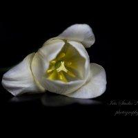На белом свете есть печаль... :: Ирина Котенева