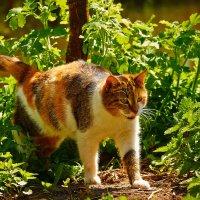 Мама кошка :: Дмитрий Колесников