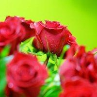 Розы :: Николай Голубков