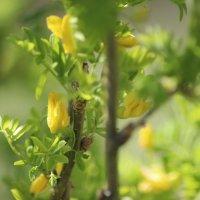 Растение на склоне горы :: Никита Живаев