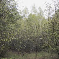 Листочки :: Алексей Хвастунов