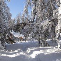 Снежное царство :: Kogint Анатолий