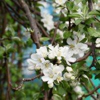 цветы :: Анастасия Тимофеева