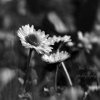 Разговор на ветру.. :: Ирина Котенева