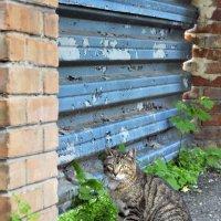 Кот, который гуляет сам по себе... :: Наталья Костенко