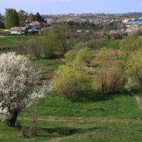 Весенний день :: Алина Тазова