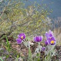 Весна :: Влад Никишин