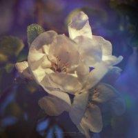 Цветы на закате 1 :: DmitryLis