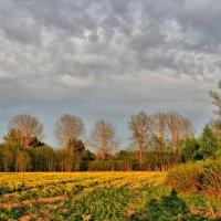 Весна цвета осени-2 :: Андрей Куприянов