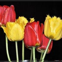Букет тюльпанов (2) :: Валерий Викторович РОГАНОВ-АРЫССКИЙ