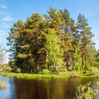 Река Колпь... :: Дмитрий Янтарев