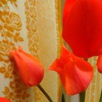тюльпаны :: Андрeй Владимир-Молодой