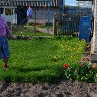 наши соседи :: Евгения Бакулина