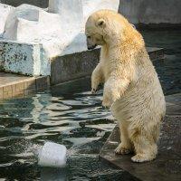 Сахар? Лёд? :: Татьяна Титова