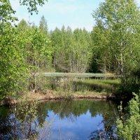 Озерко в лесу :: александр пеньков