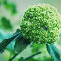 Цветок и муха :: Василий Игумнов