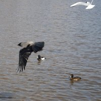 Весеннее оживление на городском озере :: Елена Перевозникова