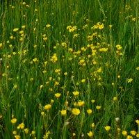 полевые цветы :: Виктор Хорьяков