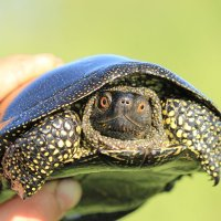 Черепаха :: Александр Moryak 34