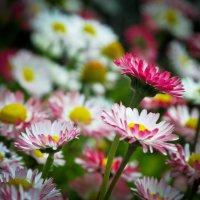Цветы :: Евгений Зузык