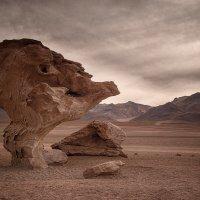 каменное дерево :: сергей агаев