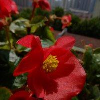 Цветы на окне :: Андрей Фиронов