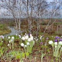Весенний пейзаж. :: Наталья Юрова