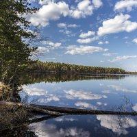 Таёжное озеро :: Юрий Сименяк