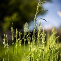 Трава :: Курнулли