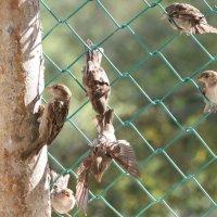 Очередное препирание с соседом из-за гнезда около зоосада :: Вячеслав