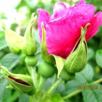 Цветок :: Александр Надежин