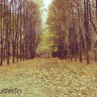 Осенний вальс :: Chera -