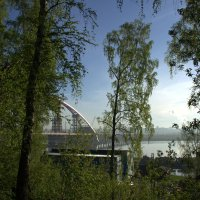 Бугринская роща и новый мост. Вместе веселее.. :: Иван Иванов