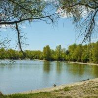 Весеннее озерко :: Vadim Piottukh