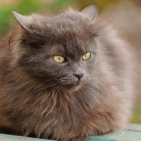 Кошка с очень сюрьёзным видом :: Анатолий Клепешнёв