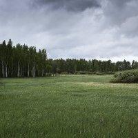 На поляне. :: Kassen Kussulbaev