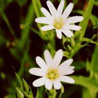 flowers :: Ira Bur