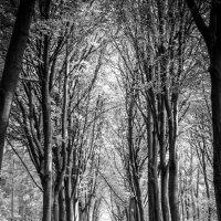 лес :: Tatjana Feist