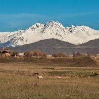 Предгорье Тянь-Шаня. Киргизия. :: Ирина Токарева