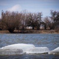 Ранняя весна на реке :: Алена Рыжова