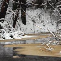 сказочный лес :: Кристина Щукина