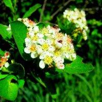 Цветёт и пахнет) :: Катя Бокова